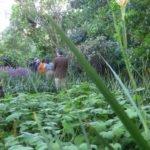 Umberto Pasti's garden