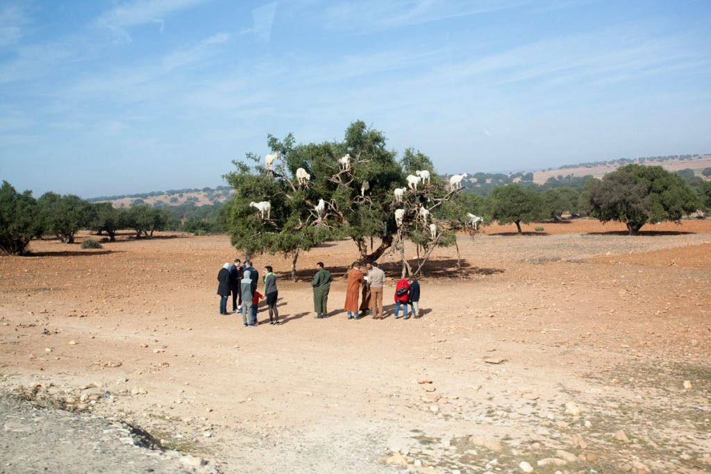 The-Desert-Behind_Yiannis-Katsaris_2